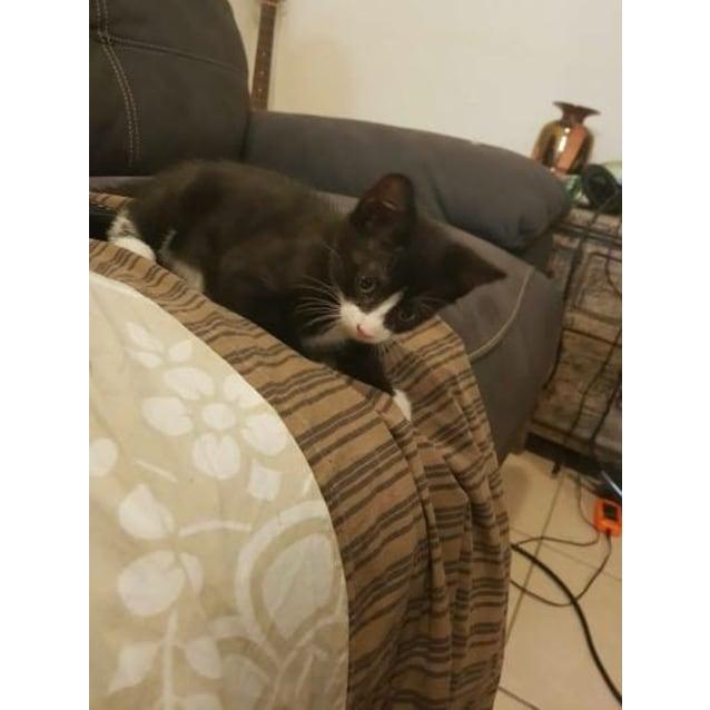 Photo of Missandei