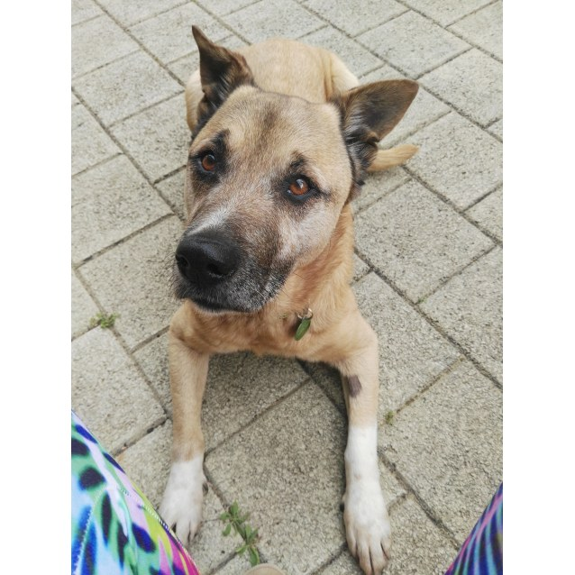 Photo of Sam Hd17 036 ** Foster Carer Required**