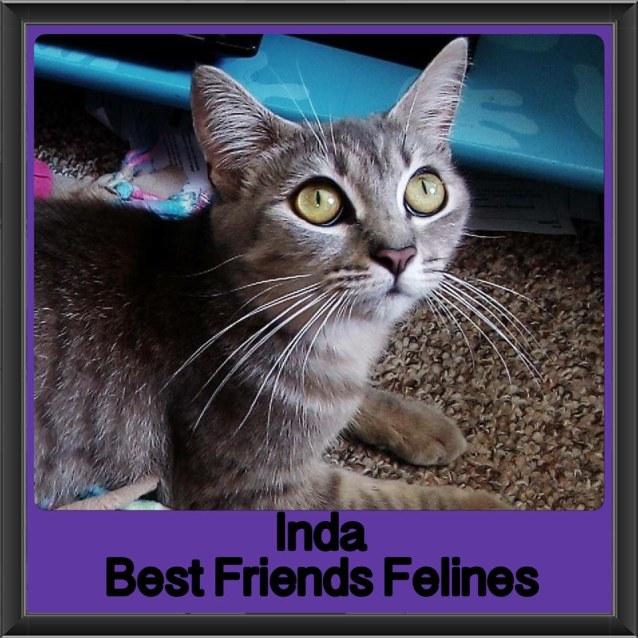 Photo of Inda