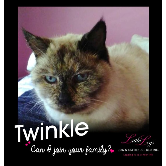 Photo of Twinkle