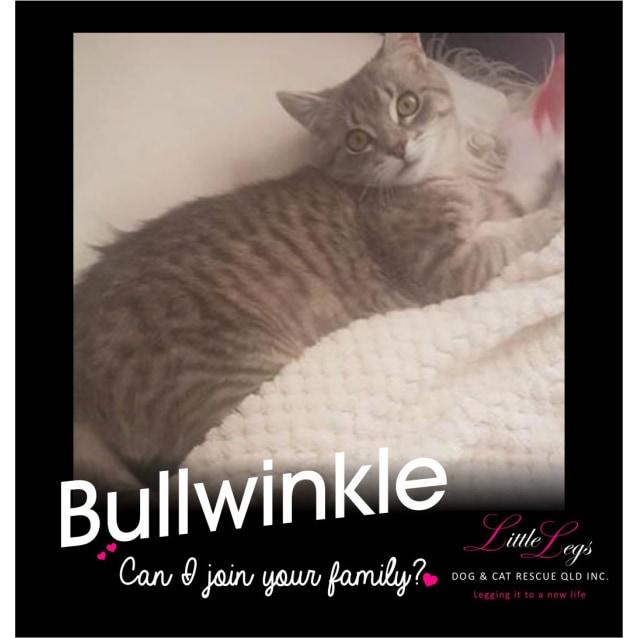 Photo of Bullwinkle