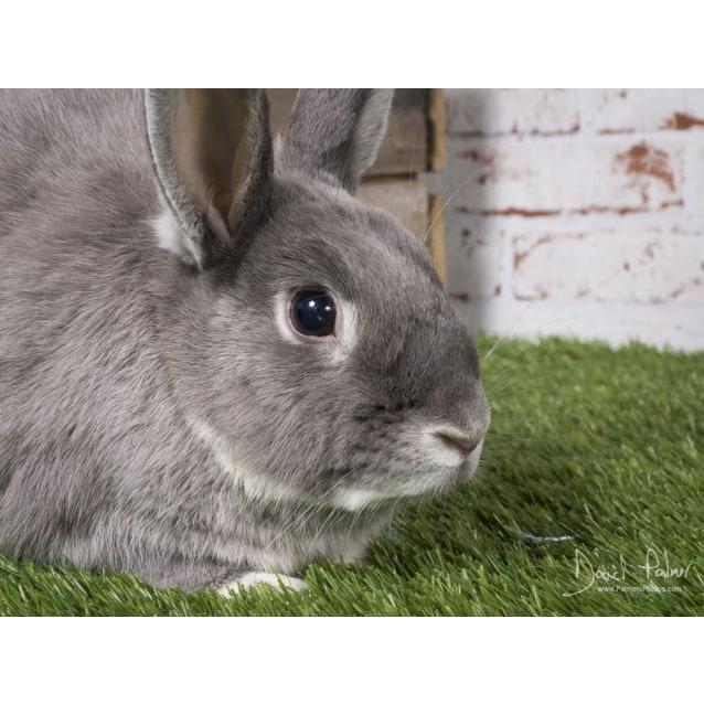 Photo of Bugsy