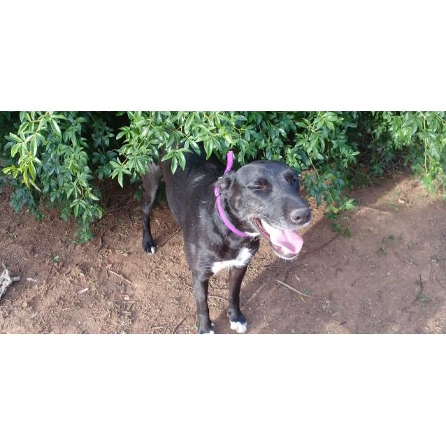 Photo of Mia (On Adoption Trial)