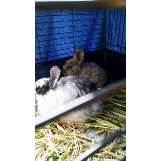 Photo of Jazzy And Oscar