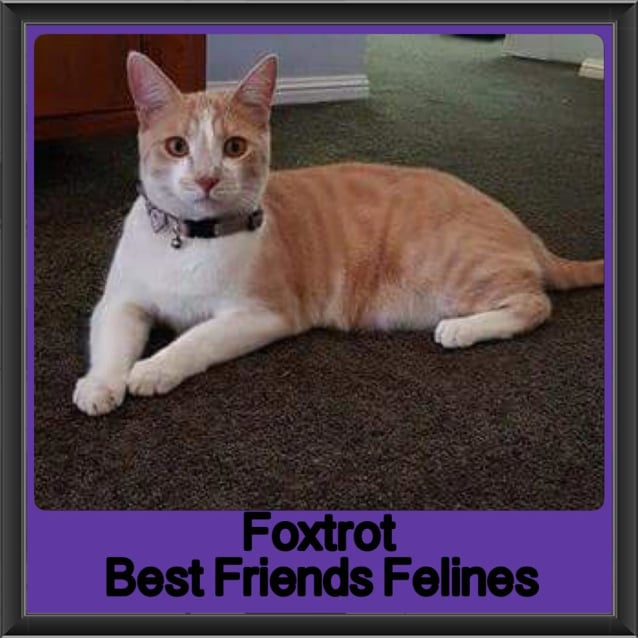 Photo of Foxtrot