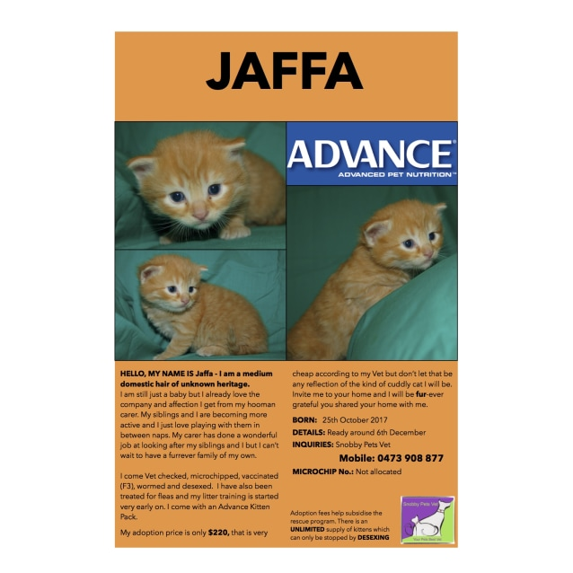 Photo of Jaffa