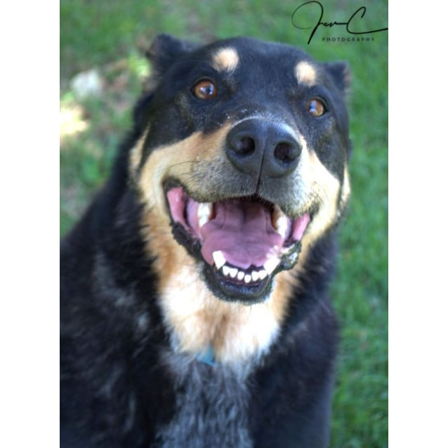 Photo of Bear *** A Loyal Loving Boy ***