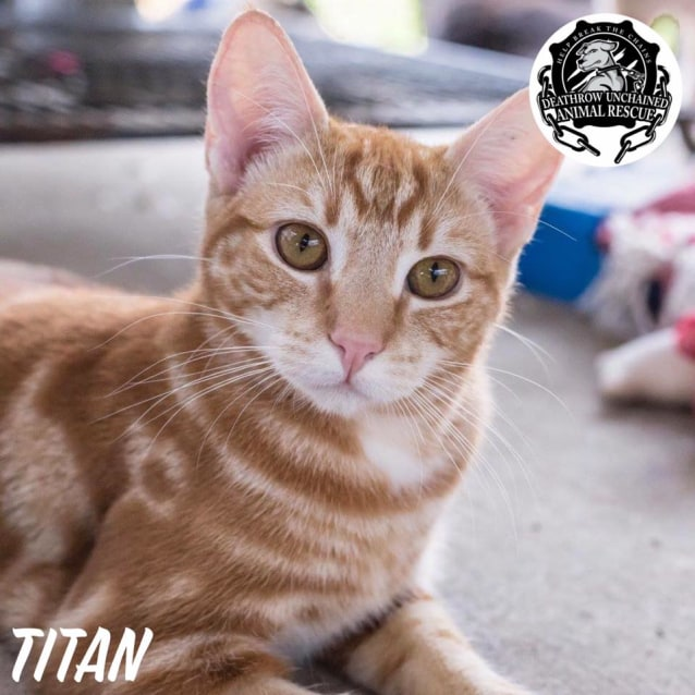 Photo of Titan
