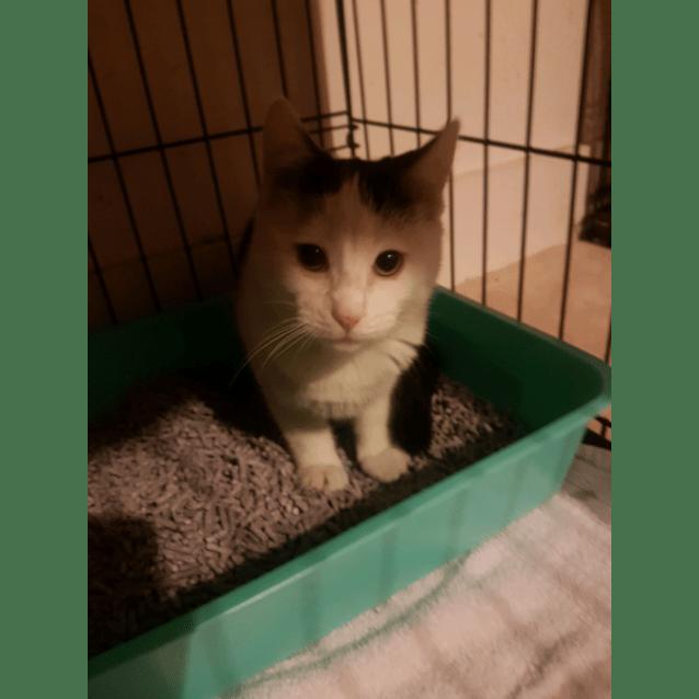Photo of Tabitha ~Rainbow Cat Rescue~