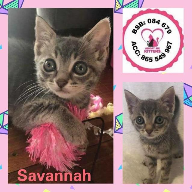 Photo of Savannah