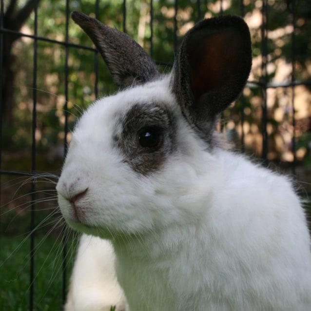 Photo of Ghandi