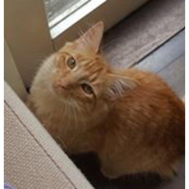 Photo of Felicia The Funny Friendly Kitten Cat