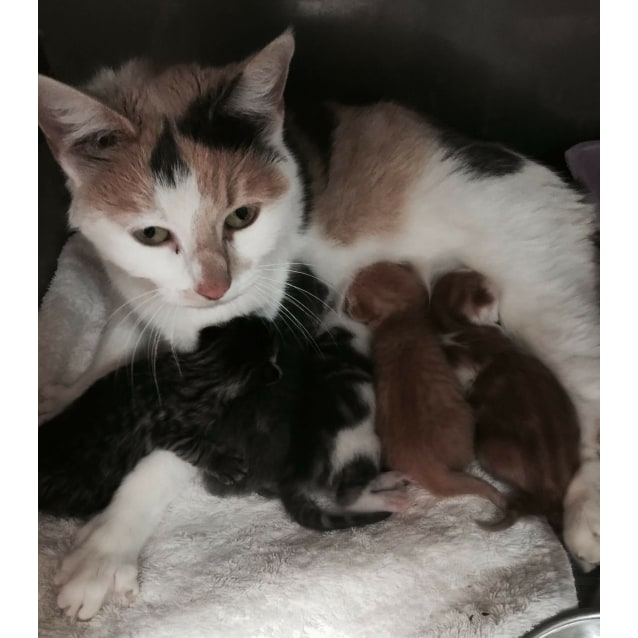 Photo of Arabelah **2nd Chance Cat Rescue**