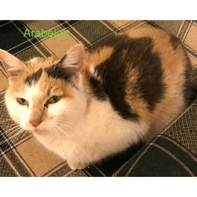 Photo of Arabelah **2nd Chance Cat Rescue**