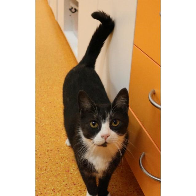 Photo of Kitty Cat