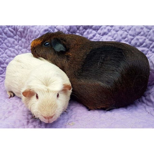 Photo of Serenity And Scamp