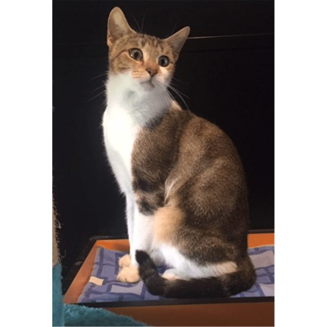 Photo of Tinkerbel