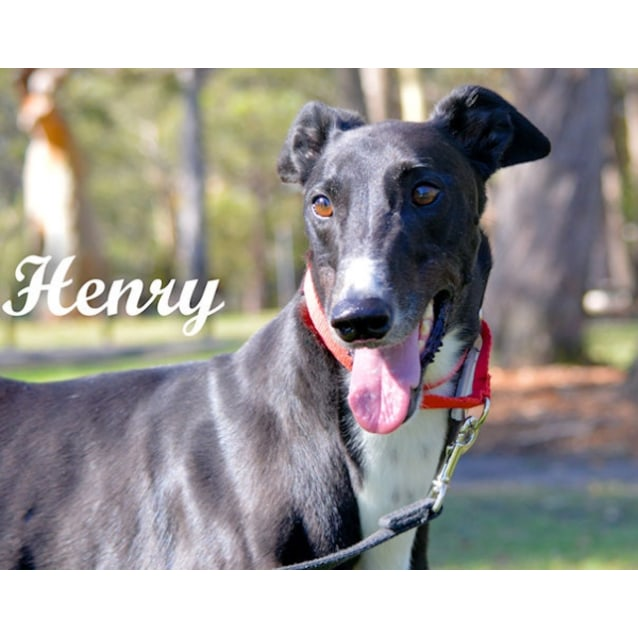 Photo of Henry