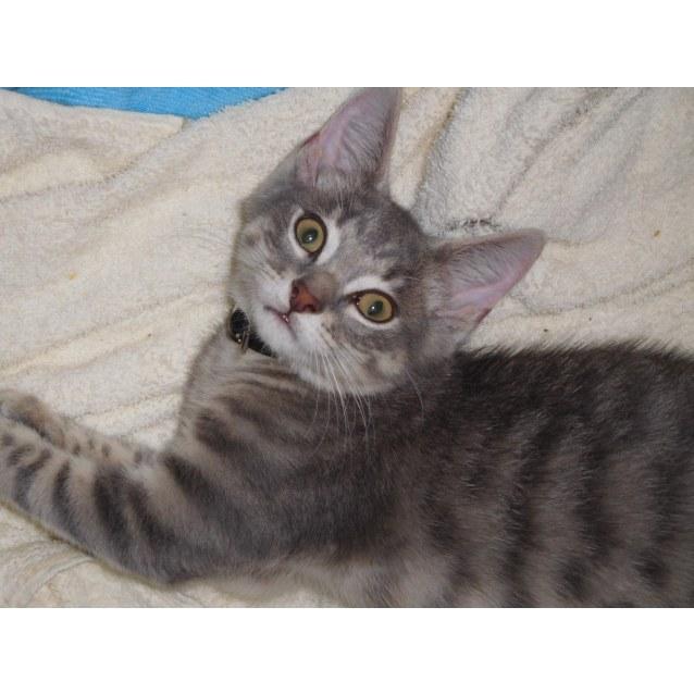 Photo of Zazie