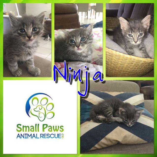 Photo of Ninja