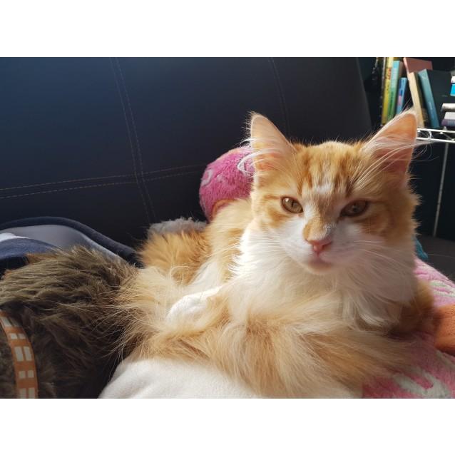 Photo of Cornelius (Located In Endeavour Hills)