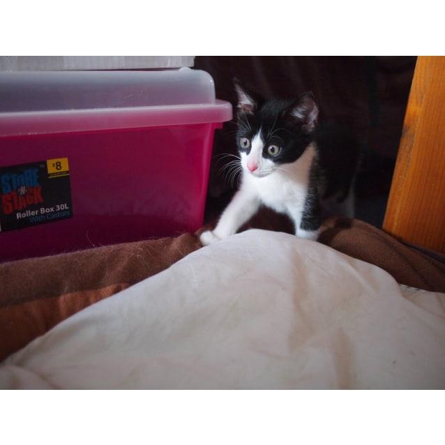 Photo of Oreo