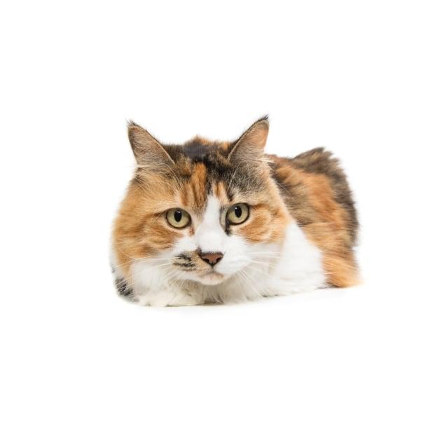 Photo of Lili
