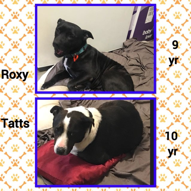 Photo of Roxy & Tatts