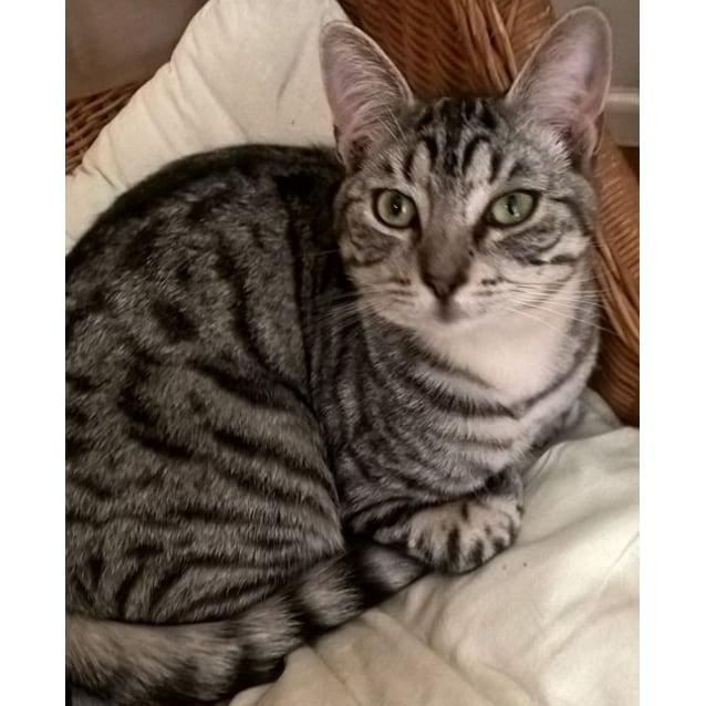 Photo of Ferris