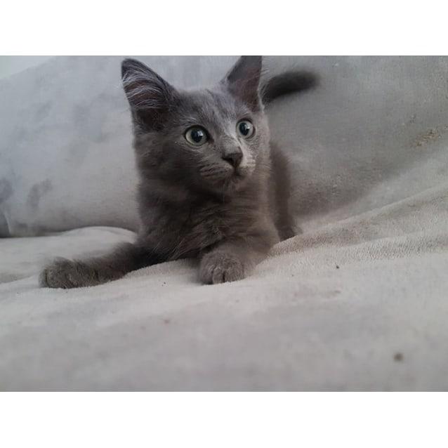 Photo of Baloo