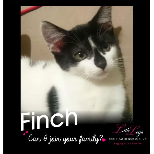 Photo of Finch