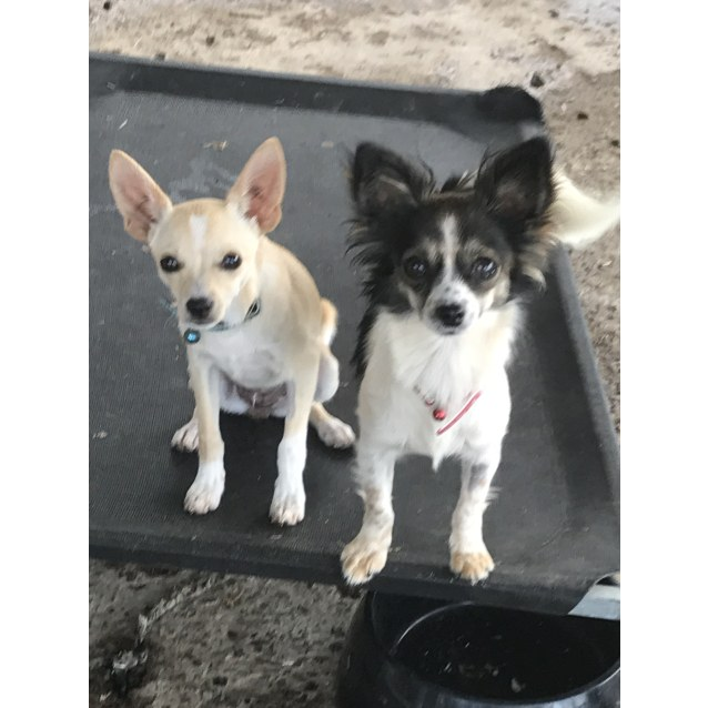Photo of Maggie And Pearl