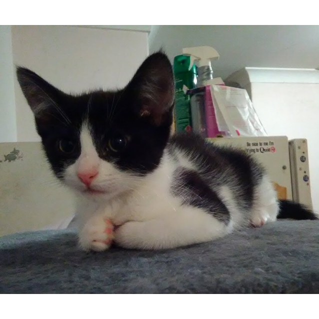 Photo of Willow**On Hold Deposit Paid