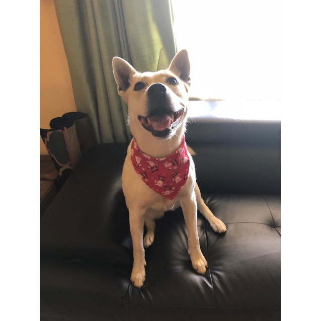 Photo of Ava  **Adopted**