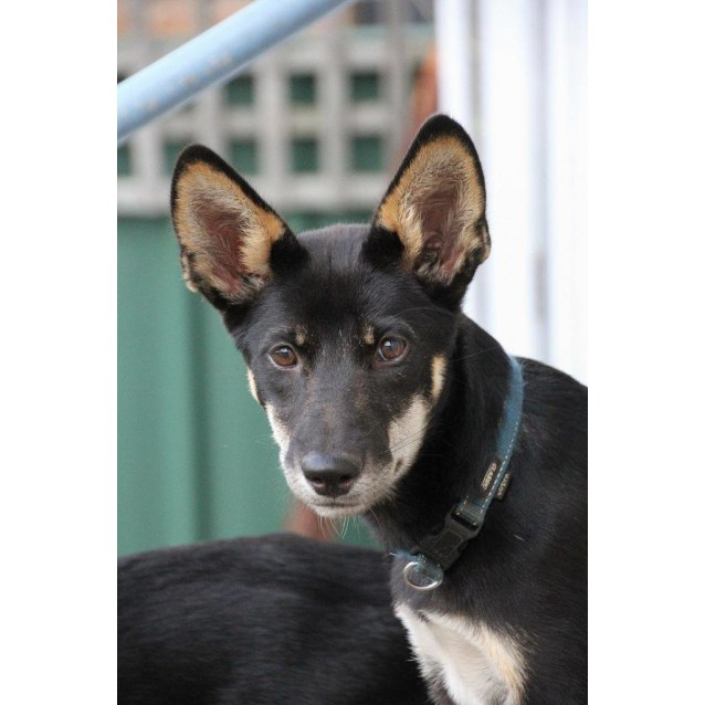 Photo of Kali Dingo