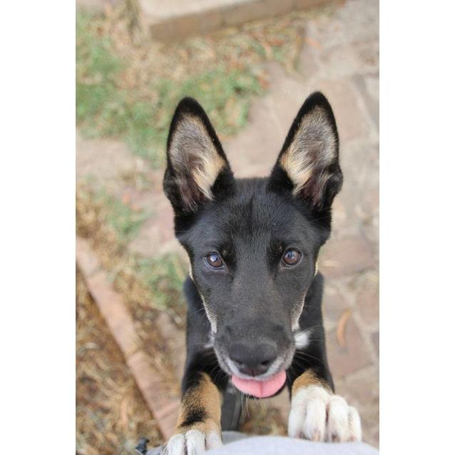 Photo of Tarni Dingo