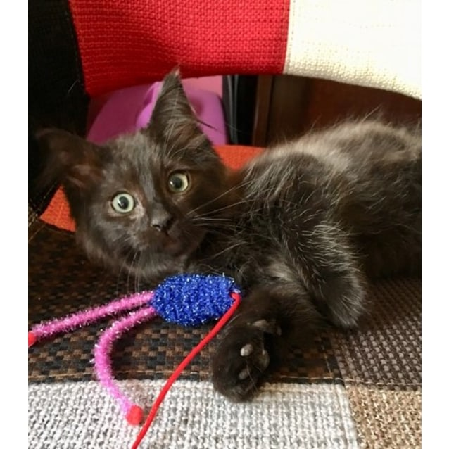 Photo of Mr Skywalker **2nd Chance Cat Rescue**