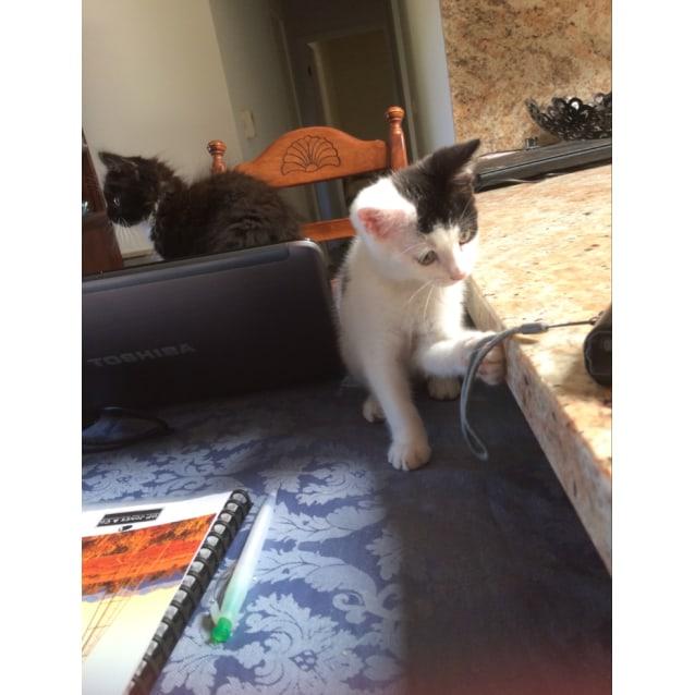 Photo of Chai Latte