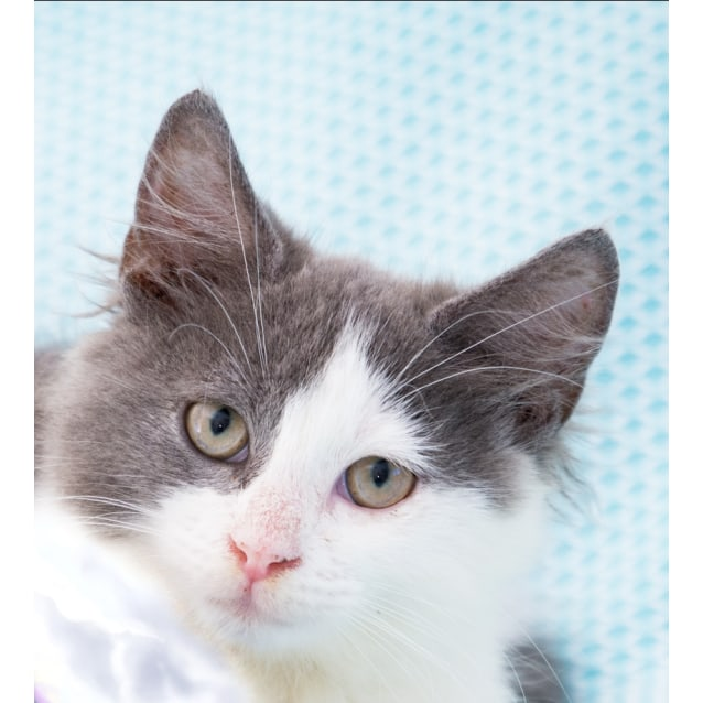 Photo of Cassie **On Trial With My New Family**