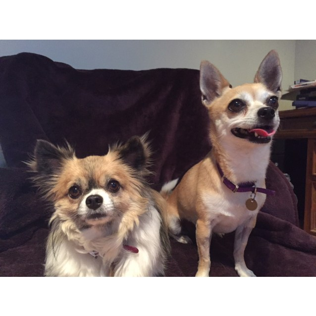 Photo of Benji And Bella