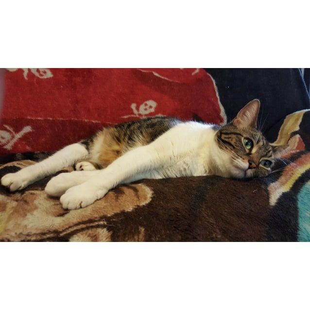 Photo of Lola