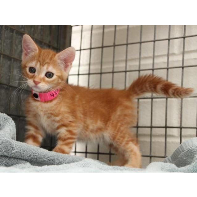 Photo of Miss Kitty (4589)