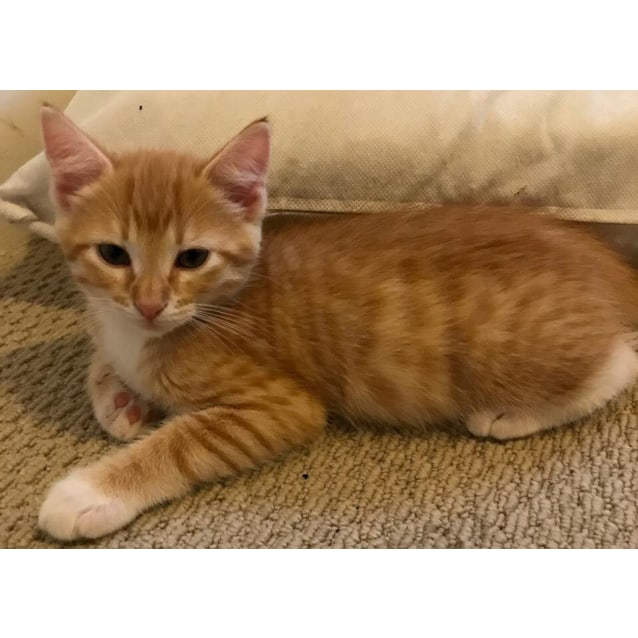 Photo of Ginger Mittens