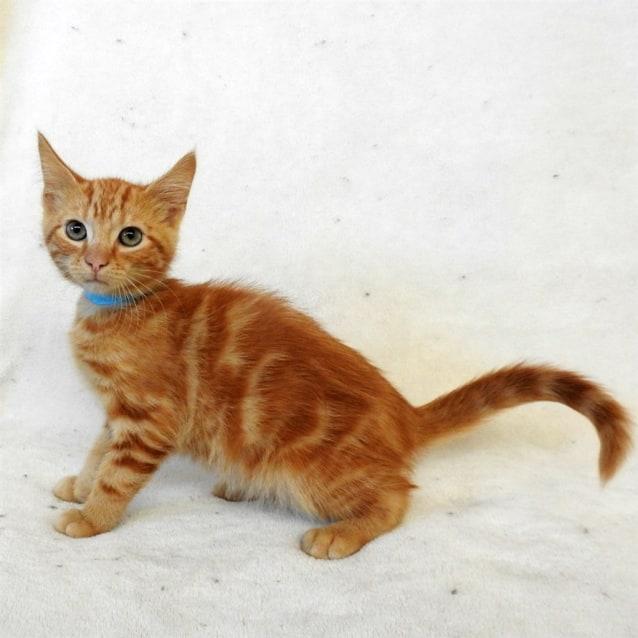 Photo of Jasper