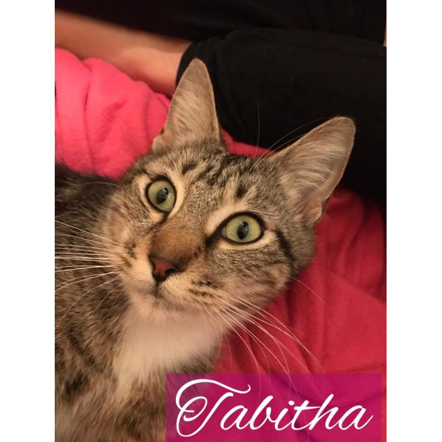 Photo of Tabitha