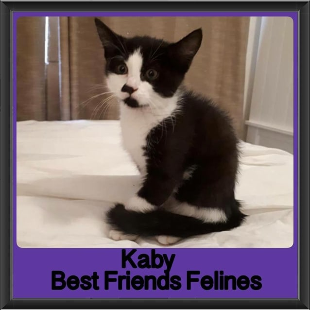 Photo of Kaby