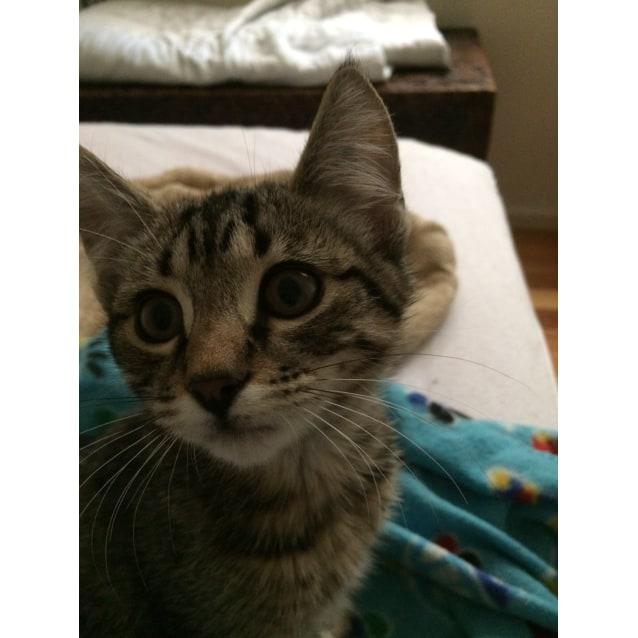 Photo of Tigger (Meet Me At Neko Hq   Preston)