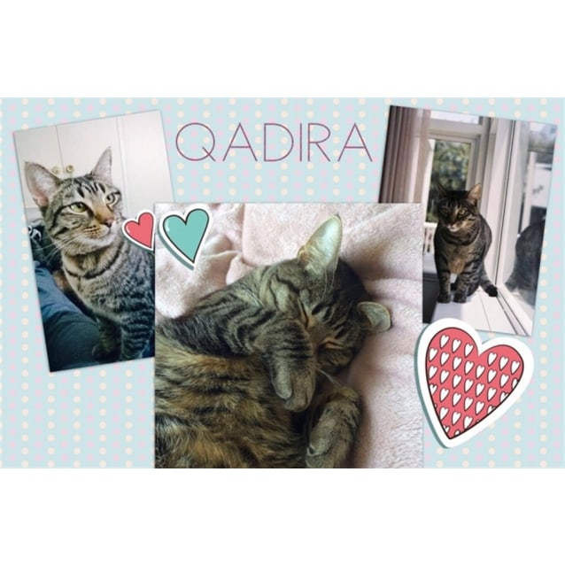 Photo of Qadira