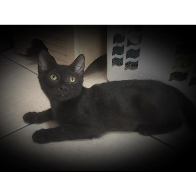 Photo of Nadiah (4615)