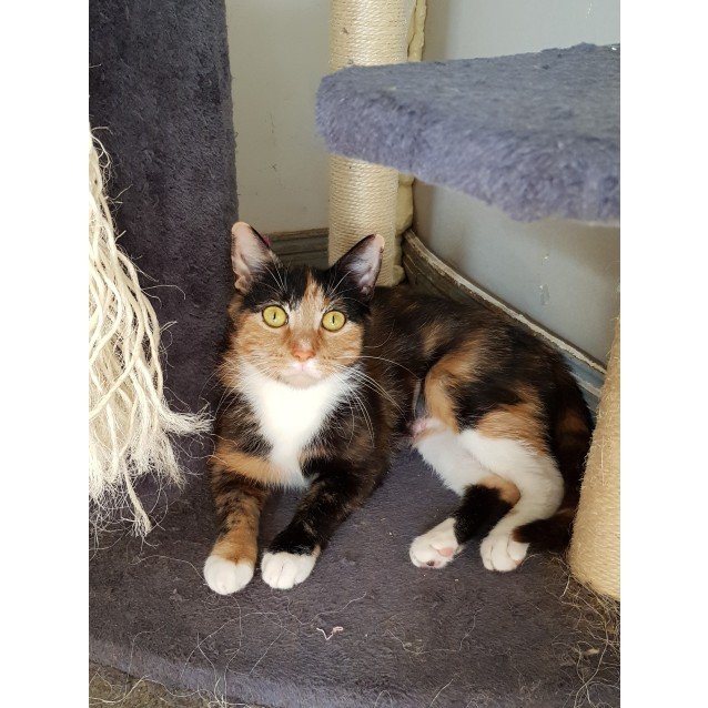 Photo of Milly (Located In Caulfield Nth)